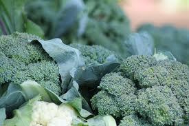 farmfreshproduce4