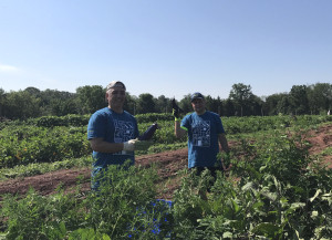 new-jersey-harvesting-produce-for-bentley-community-services_36365111531_o
