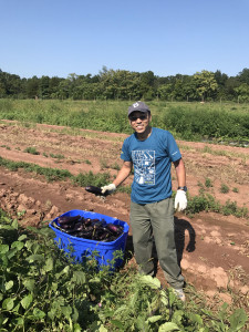 new-jersey-harvesting-produce-for-bentley-community-services_36365112151_o